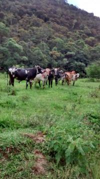 Venda Sitio Centro Rio Preto-MG - foto 5